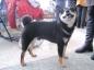 Изящный сиба-ину Кирюша крайне самостоятельный. Его порода переводится с японского как «маленькая собака».