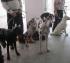 В семье Кирилловых из Башкирии 8 собак: 2 алабая, 2 добермана, немецкий дог, немецкая длинношерстная овчарка, боксер и цвергпинчер