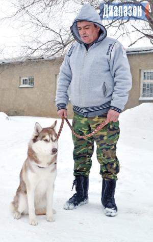 Рост и развитие щенка немецкой овчарки  Oreland питомник