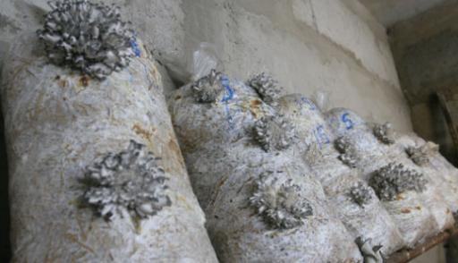 Выращивание грибов в подвале: основные правила 3