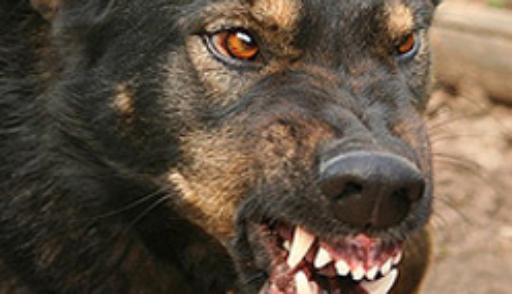 Канадец расстрелял 56 собак