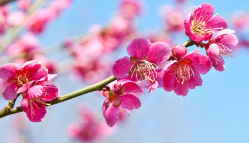 На майские праздники в казахстане