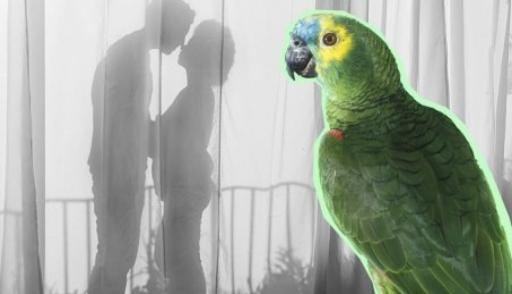 Попугай поведал жене олюбовных похождениях мужа